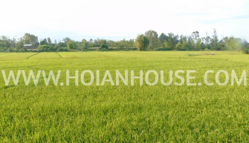 I2 BEDROOM HOUSE WITH THE RICE FIELD VIEW FOR RENT IN HOI AN