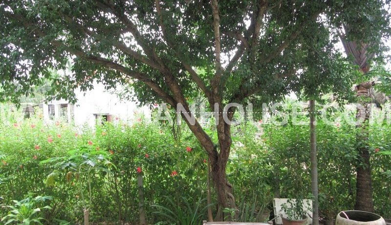 3 BEDROOM HOUSE FOR RENT IN HOI AN (#HAH247) 19